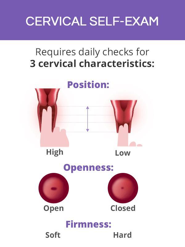 cervical-self-exam