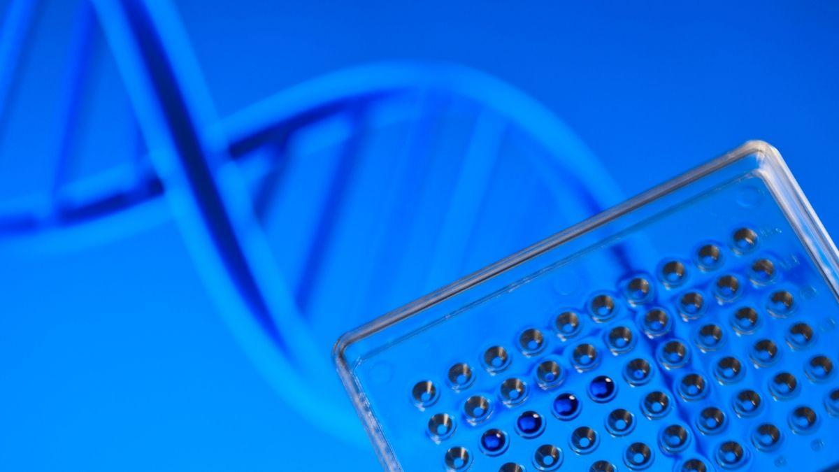 Can you do a DNA test while pregnant?